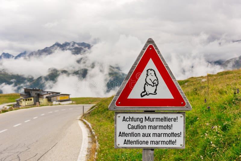 警告土拨鼠在一条高山路的交通标志 免版税库存图片