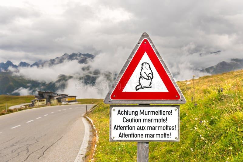 警告土拨鼠在一条高山路的交通标志 免版税库存照片