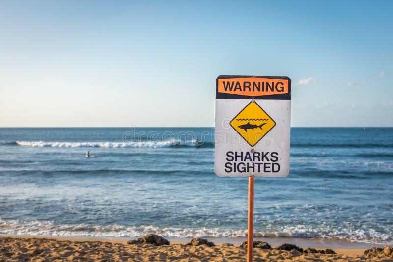 警告:被看见的鲨鱼 免版税库存图片