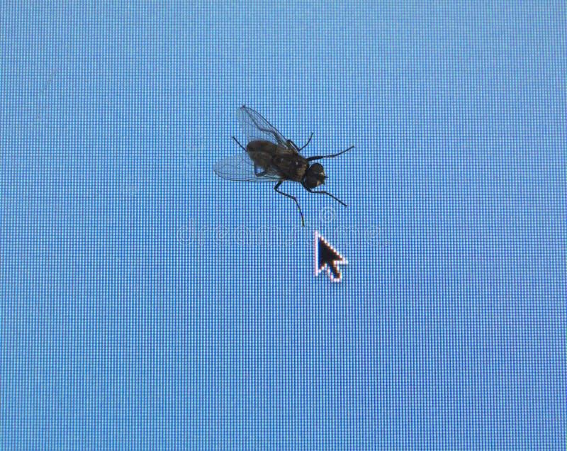 计算机家蝇屏幕 图库摄影