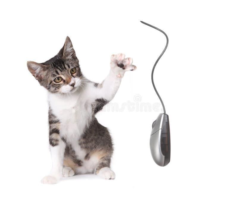 计算机小猫鼠标扑打 免版税库存图片