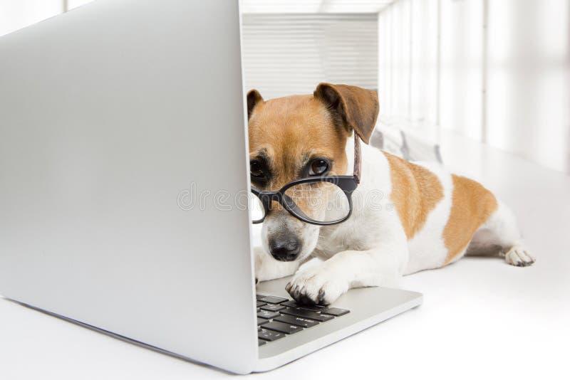 计算机狗 库存图片