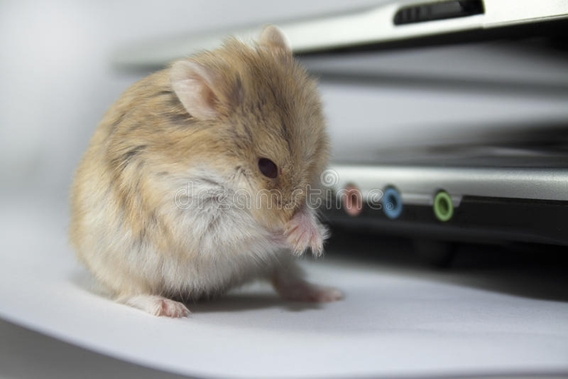 计算机鼠标 免版税库存照片