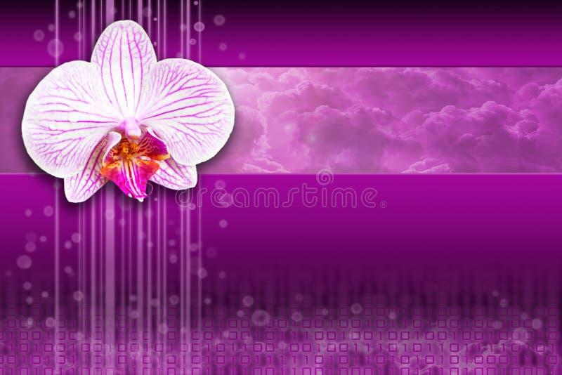 计算的设计数字式花兰花紫色 皇族释放例证