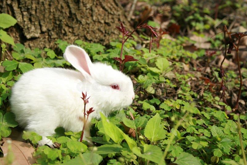 讨人喜欢的兔子 免版税库存图片