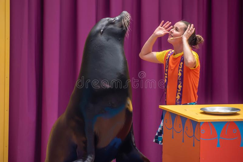 讨人喜欢的海狮使用与在海狮高展示的微笑的教练在Seaworld 4 图库摄影