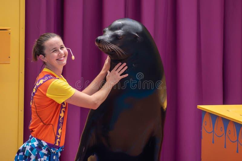 讨人喜欢的海狮使用与在海狮高展示的微笑的教练在Seaworld 6 库存照片