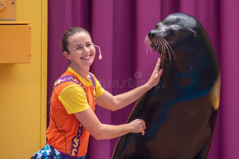 讨人喜欢的海狮使用与在海狮高展示的微笑的教练在Seaworld 7 库存图片