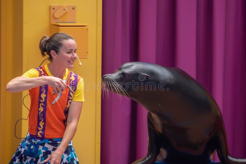 讨人喜欢的海狮使用与在海狮高展示的微笑的教练在Seaworld 1 库存照片
