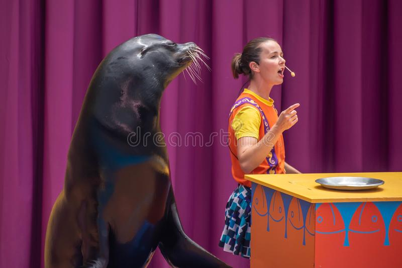 讨人喜欢的海狮使用与在海狮高展示的微笑的教练在Seaworld 3 免版税库存图片