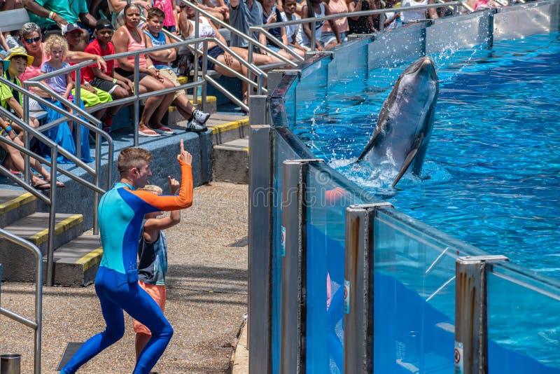 讨人喜欢dolphing的使用与教练员和小孩在海豚天在Seaworld 5显示 免版税库存图片
