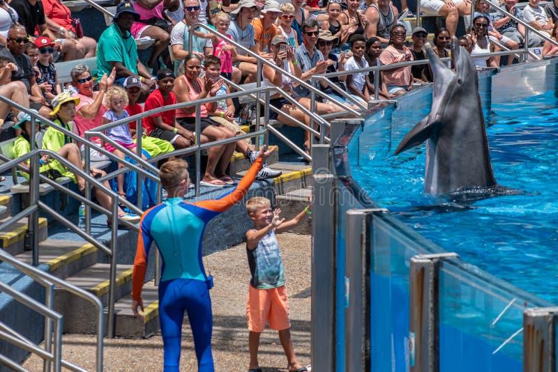 讨人喜欢dolphing的使用与教练员和小孩在海豚天在Seaworld 2显示 库存照片