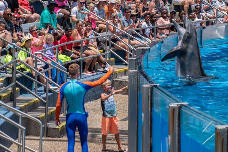 讨人喜欢dolphing的使用与教练员和小孩在海豚天在Seaworld 3显示 图库摄影