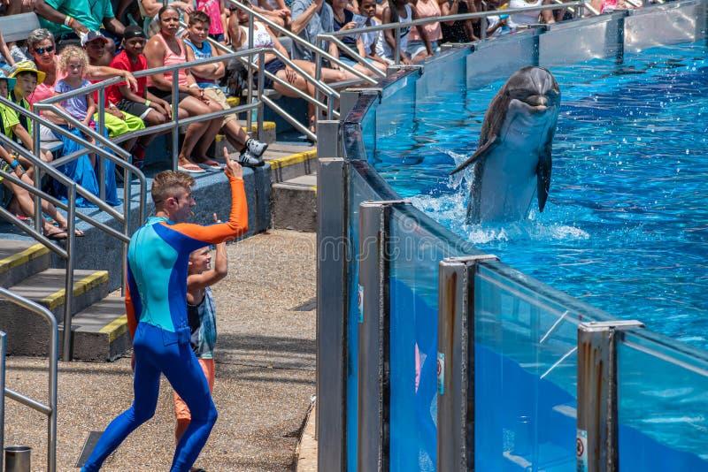 讨人喜欢dolphing的使用与教练员和小孩在海豚天在Seaworld 6显示 免版税库存图片