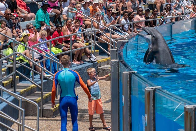 讨人喜欢dolphing的使用与教练员和小孩在海豚天在Seaworld 4显示 图库摄影