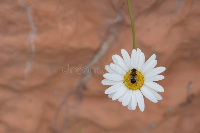 讨厌的人坐森林春黄菊的森林花 免版税库存照片