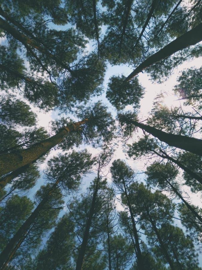 让我们保存和保存森林| 库存图片
