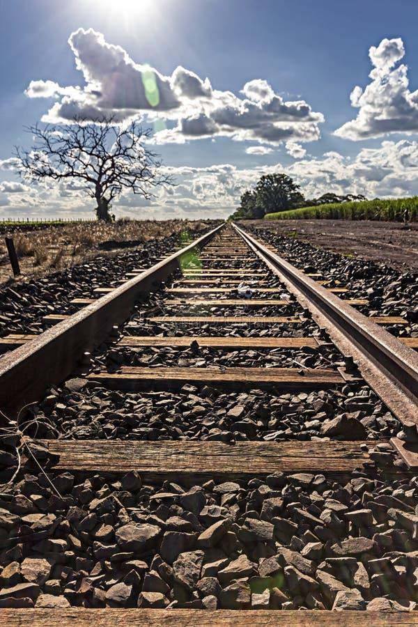 训练与干树的轨道在甘蔗的和种植园左面在与太阳面对的右边 库存图片