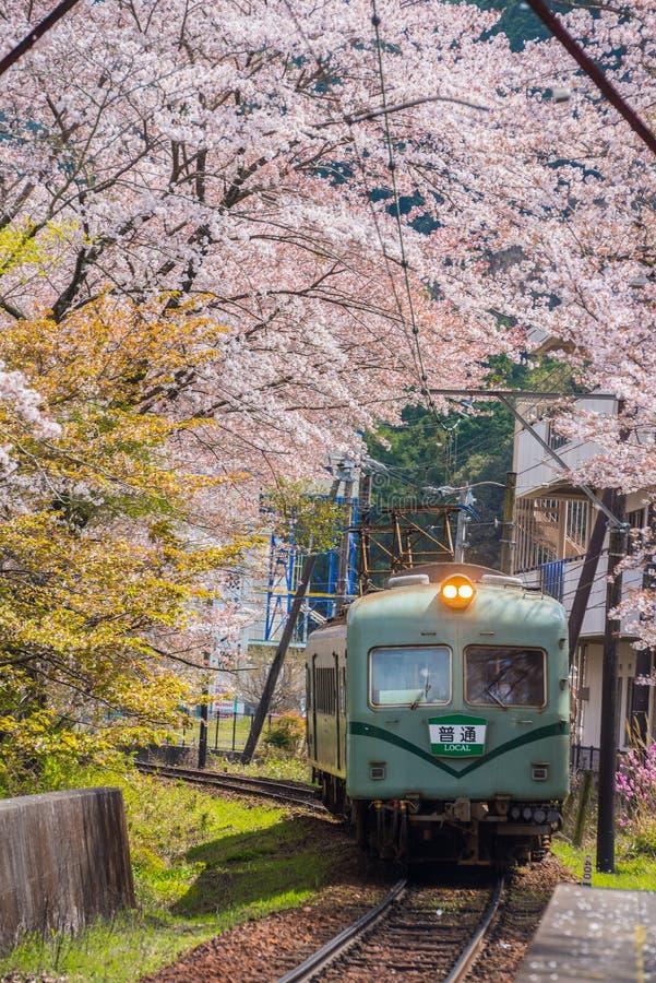训练在穿过樱花隧道的铁路 免版税库存图片