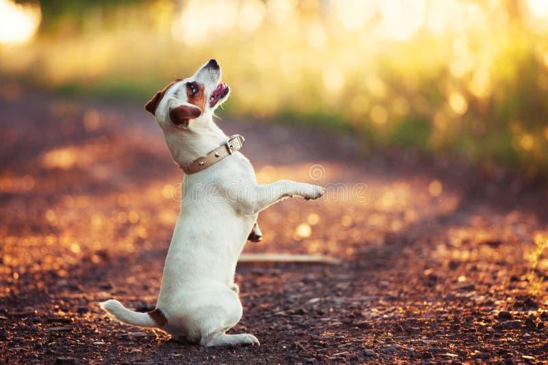 训练户外秋天的狗 免版税库存照片