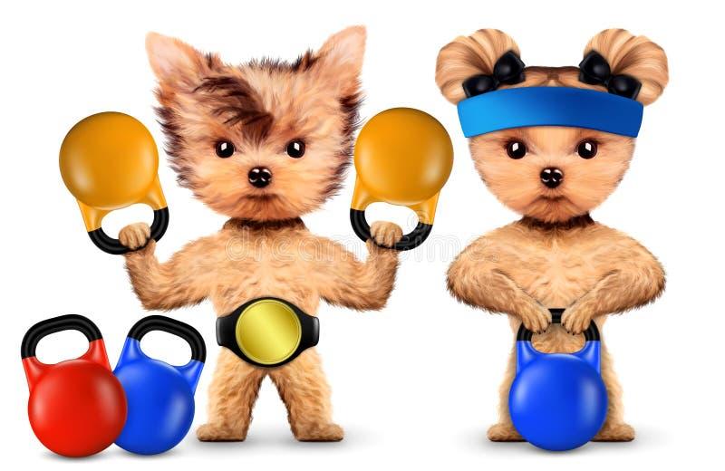 训练与在体育健身房的kettlebells的滑稽的狗 库存例证