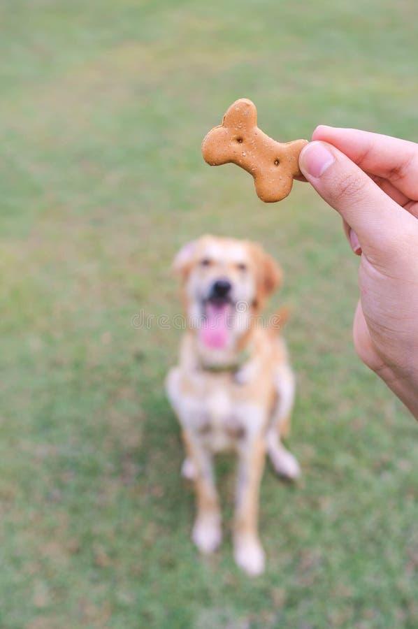 训练的喂狗的硬饼干 库存照片