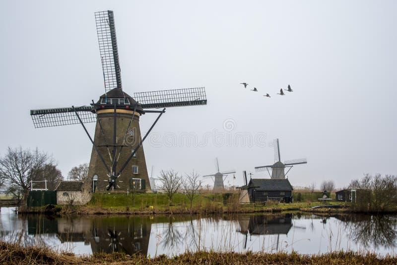 议院和荷兰的巨型windwill 库存照片