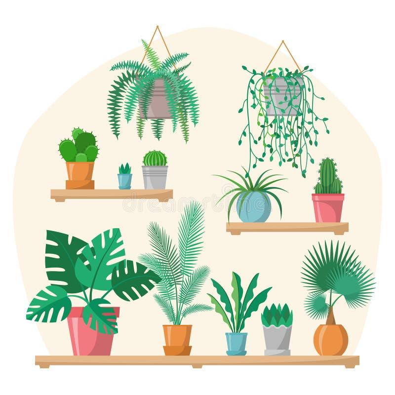 议院在平的样式的植物汇集与细节,五颜六色的罐的室内家庭植物在架子,绿色集合,棕榈 库存例证