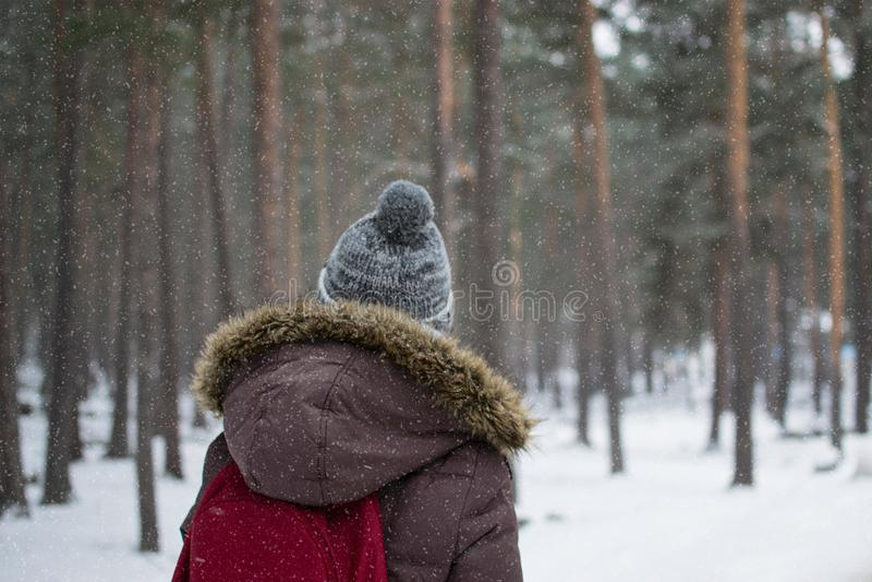 记录在森林里 库存照片