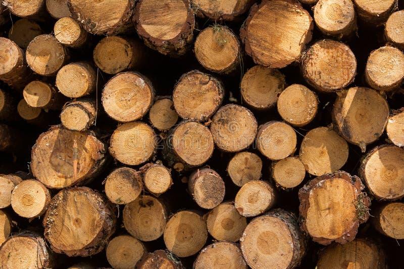 记录木头 库存照片