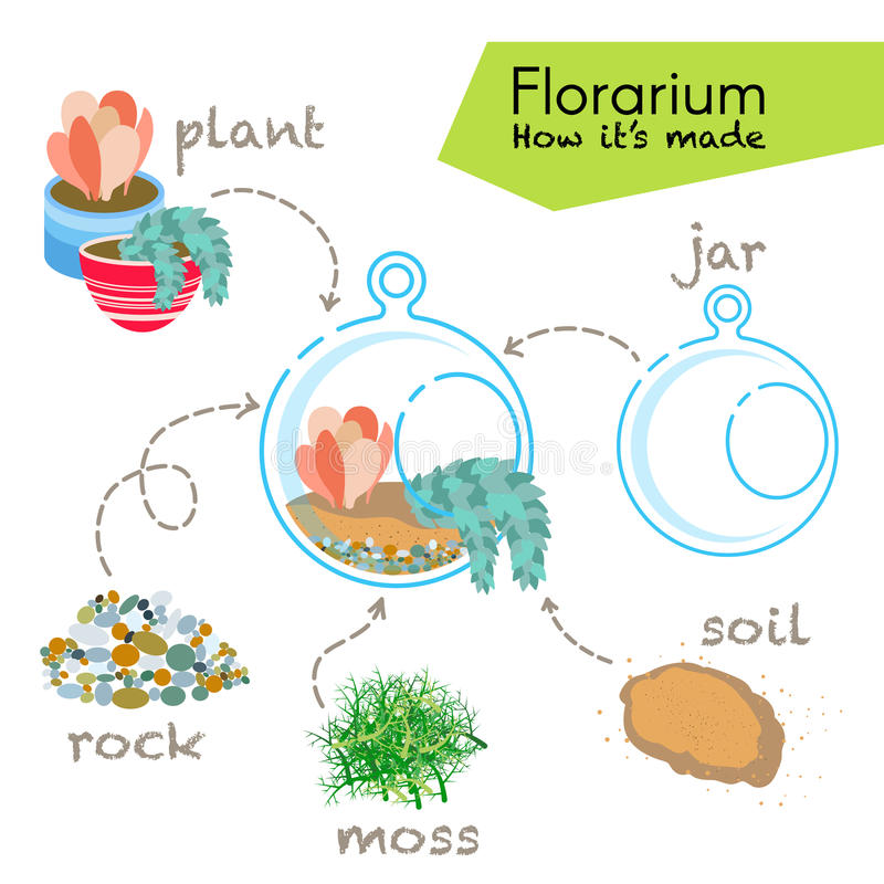 讲解如何做florarium 在玻璃玻璃容器里面的多汁植物, florarium的元素:瓶子,植物,岩石,青苔,土壤 皇族释放例证