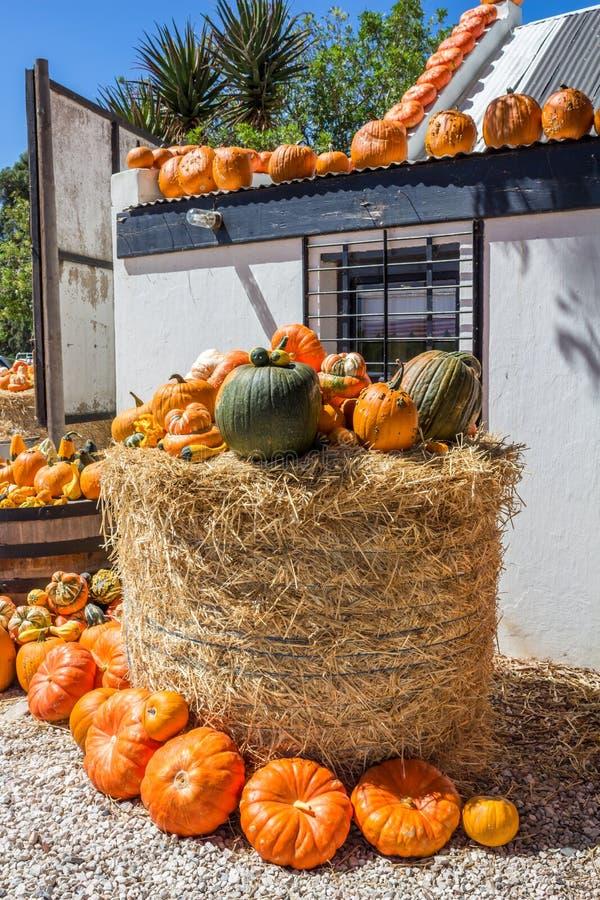 许多南瓜在农厂摊位的待售在一条路旁边在南非 免版税库存照片