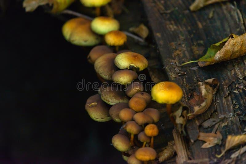 许多危险不可食的蘑菇在一个黑暗的森林里 免版税库存照片