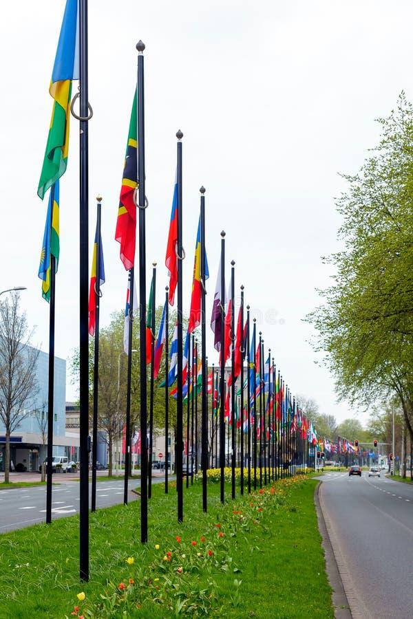 许多另外旗子街道欧洲成员联合大厦国家国家路线草开花绿色类型海牙 图库摄影