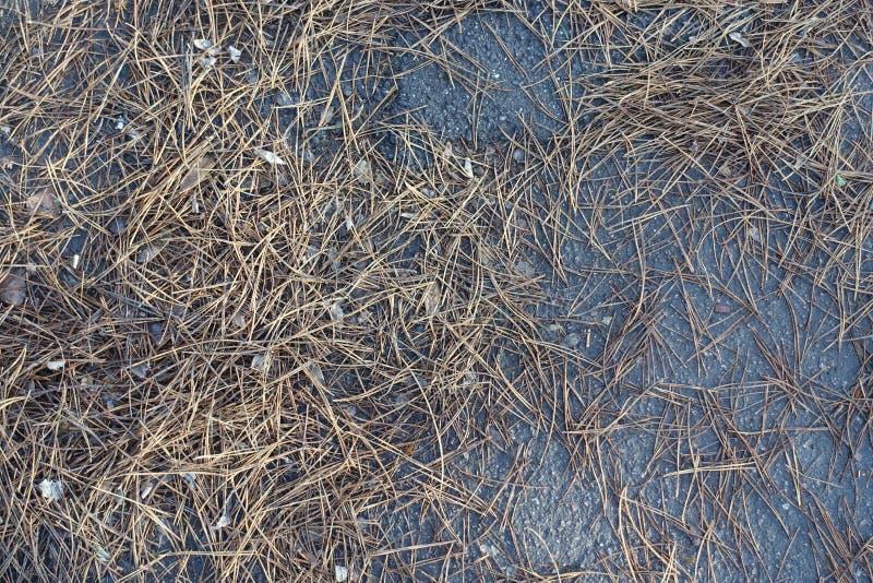 许多在地面上的杉木针 免版税库存照片