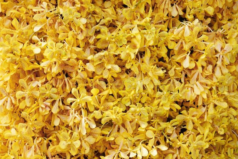 许多在庭院里装饰的美丽的开花的兰花,背景的黄色花兰花 库存图片