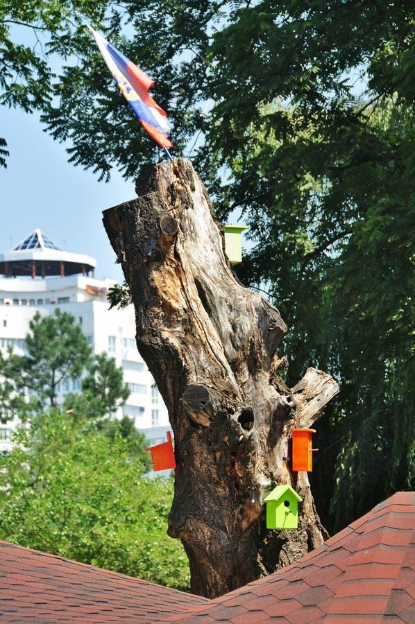 许多在树的五颜六色的木鸟舍 免版税库存图片