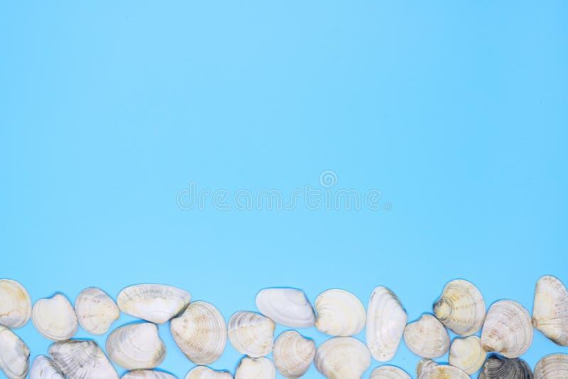 许多壳创造在蓝色背景,文本的背景的bardyur 免版税图库摄影