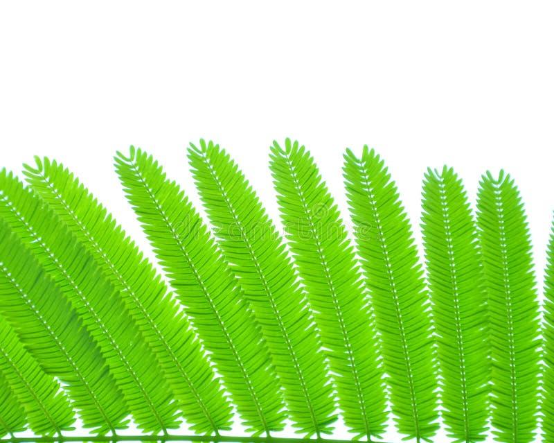 许多小叶子是隔离 免版税库存照片