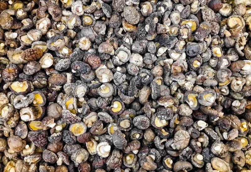 许多干什塔克菇在市场上 免版税库存图片