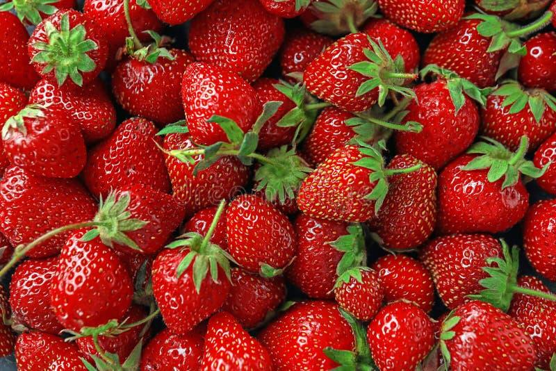 许多成熟草莓 免版税库存图片