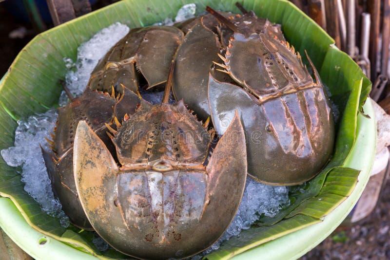 许多新鲜的皮条客在海鲜市场上被卖 r 辣鲎蛋沙拉,皮条客蛋沙拉 泰国海鲜 免版税库存图片