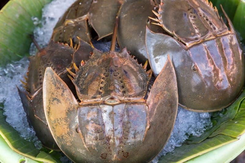 许多新鲜的皮条客在海鲜市场上被卖 r 辣鲎蛋沙拉,皮条客蛋沙拉 泰国海鲜 库存照片