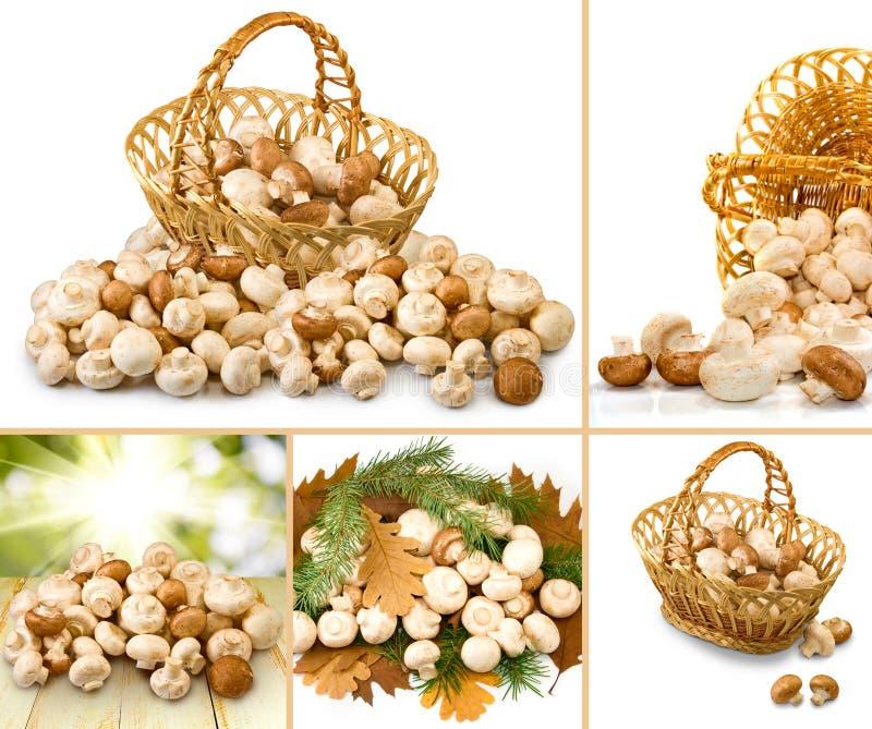 许多新鲜的蘑菇特写镜头 库存照片