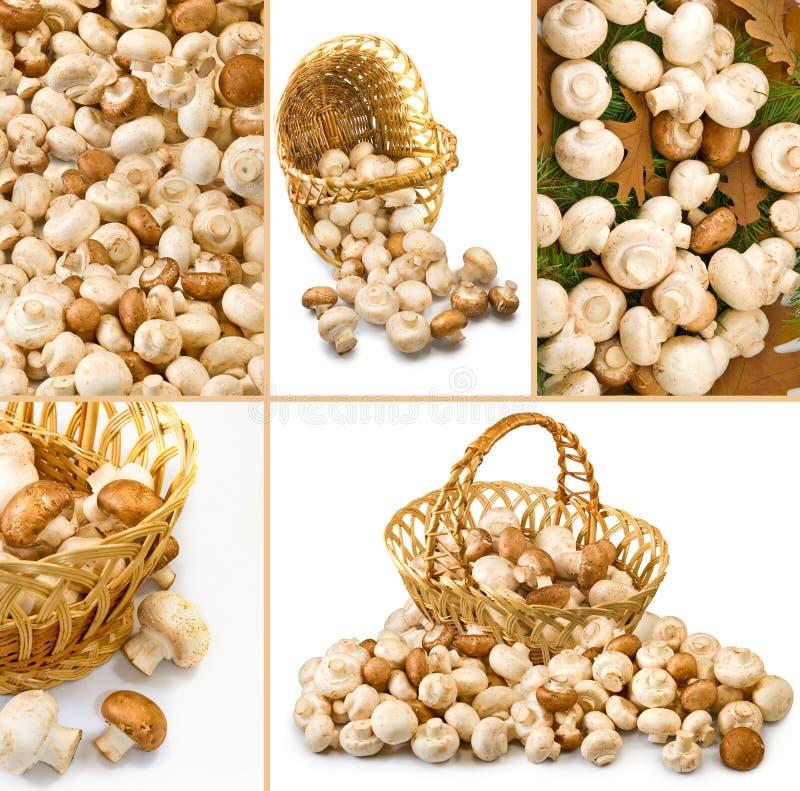许多新鲜的蘑菇 免版税库存照片