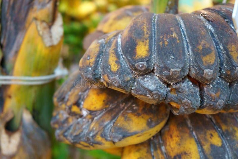 许多束种植成熟香蕉,芭蕉科acuminata科拉 图库摄影
