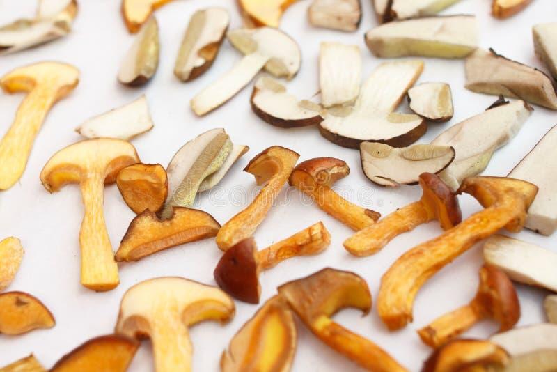 许多森林蘑菇 库存图片