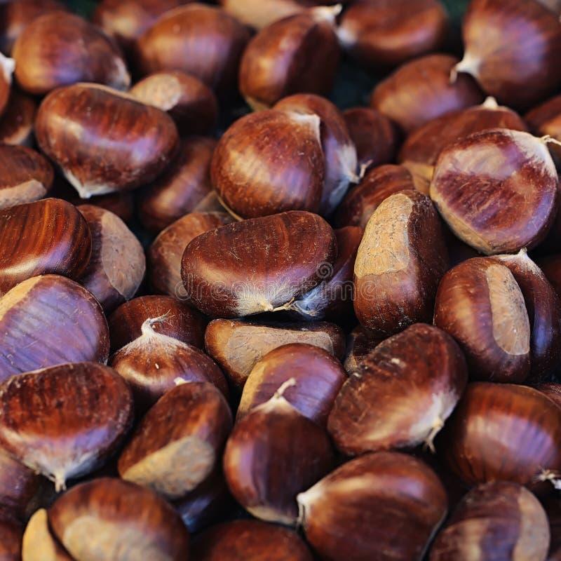 许多欧洲栗木果子 库存照片