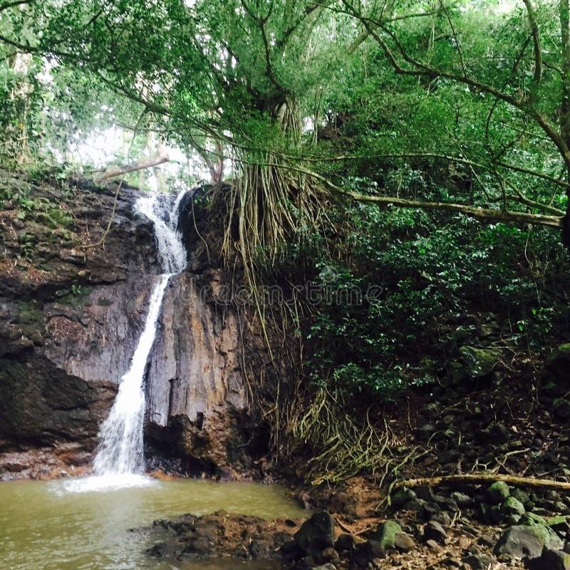 许多瀑布之一在夏威夷 库存照片