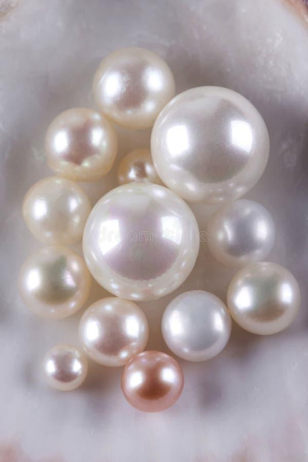 许多珍珠贝壳 免版税库存图片